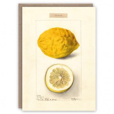 The Pattern Book Lemon Card