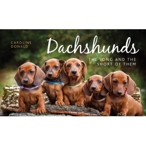 Dachshunds: The Long & The Short Of Them